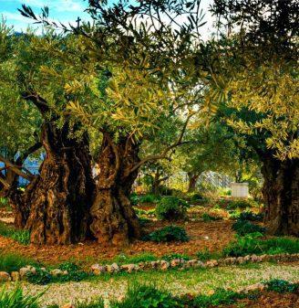 The Last Hours of Jesus Gethsemane