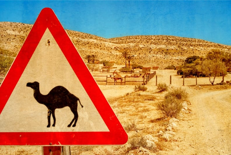 Camel Rides in Israel Sign