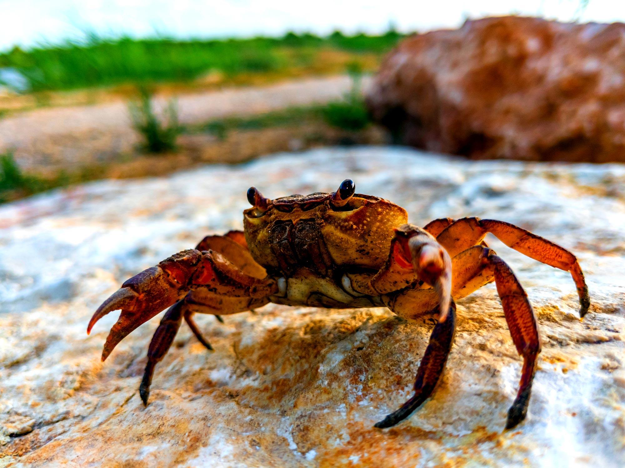 Israel's Shoreline Top Trails - Red Crab