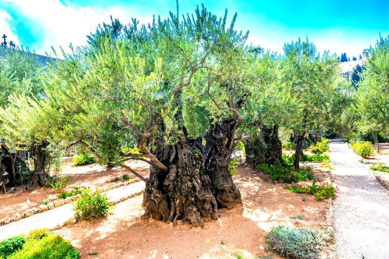 Old City Jerusalem Tour - Gethsemane