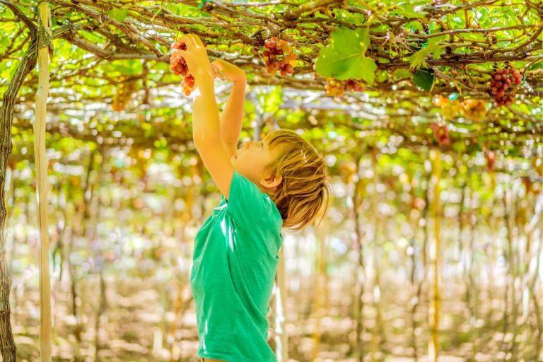 Samaria Day Tour - Psagot Winery Child