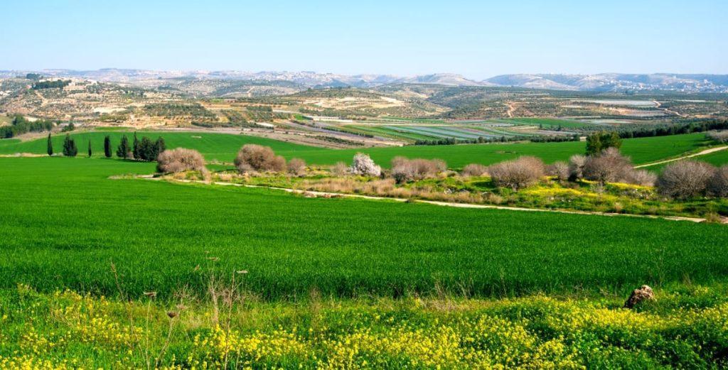 David and Goliath Ellah Valley