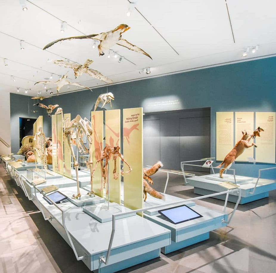 The Steinhardt Museum of Natural History Collection