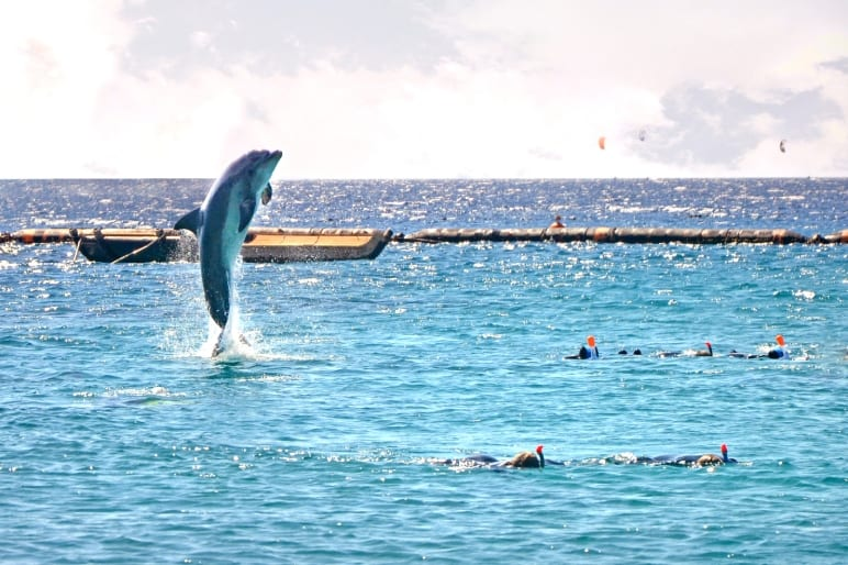 Diving in Eilat Dolphin