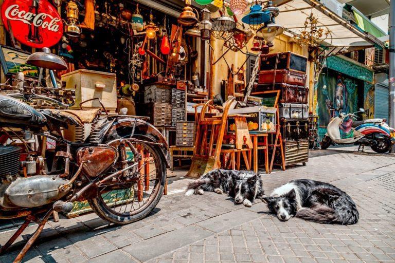 Old Jaffa Tour - Jaffa Flea Market Dogs