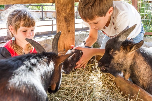 Fun Things to Do in Israel With Kids - Naama Farm