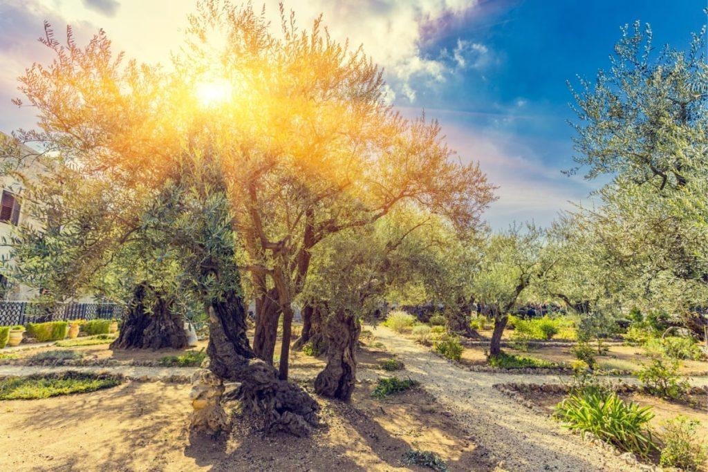 Key Sites in Jerusalem - Gethsemane