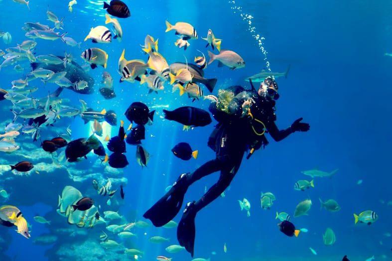 Diving in Eilat Diver