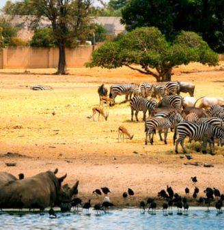 Ramat Gan Safari