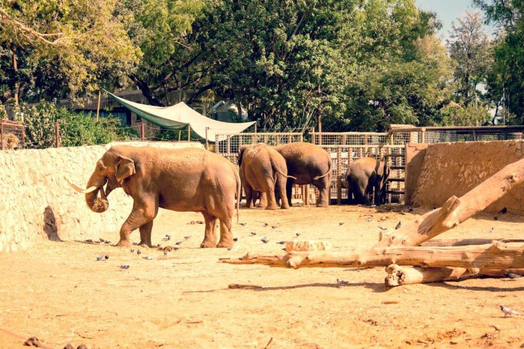 Tel Aviv's Zoo Elephants