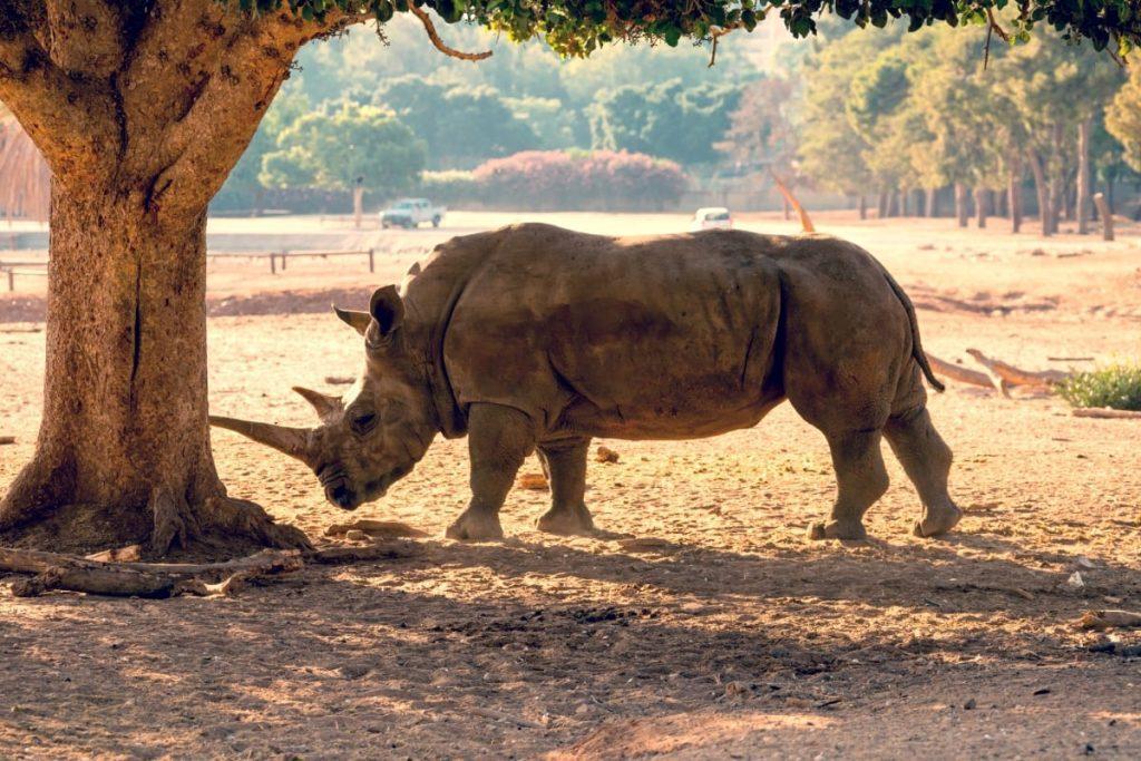 Tel Aviv's Zoo Rhinos