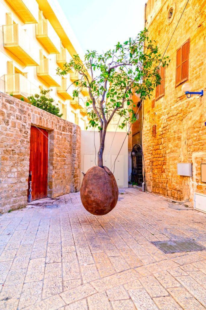 Suspended Orange Tree Jaffa