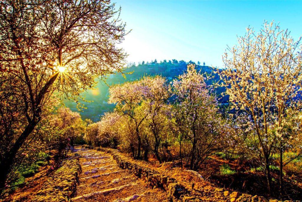 Sataf Trail