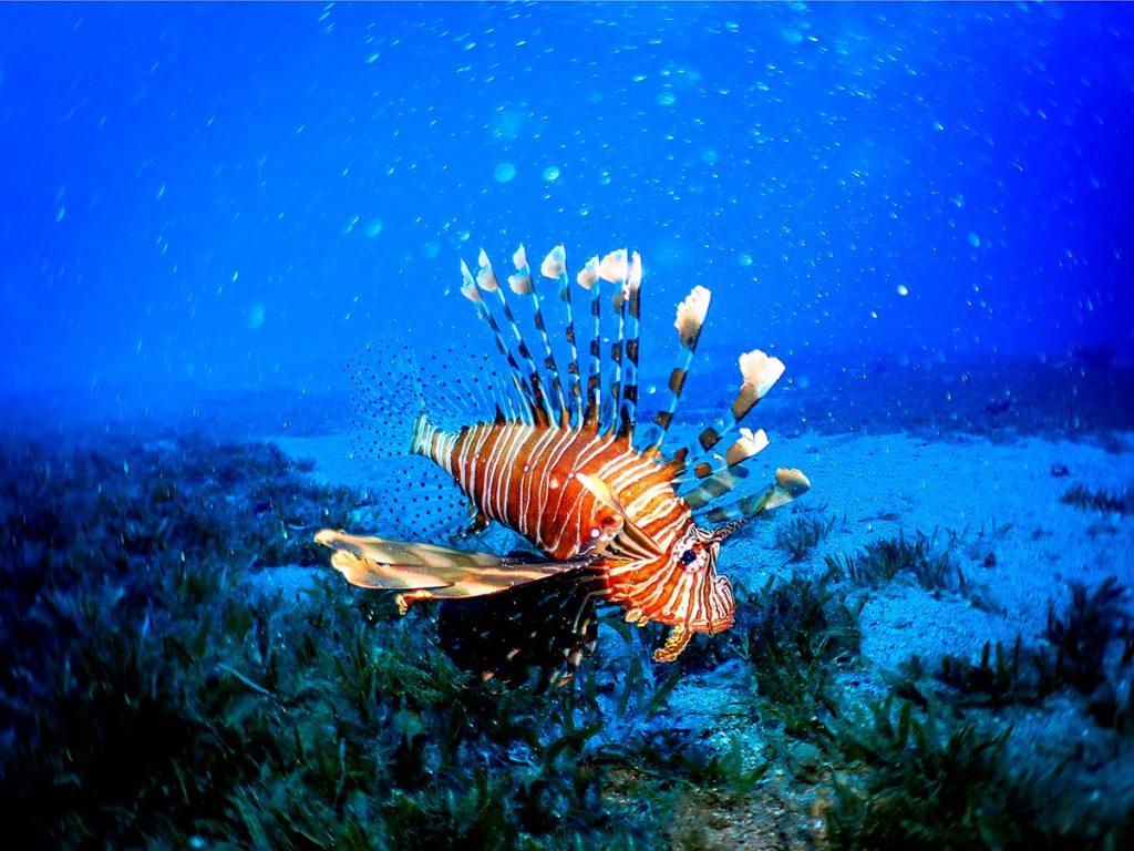 Coral World Underwater Observatory Park