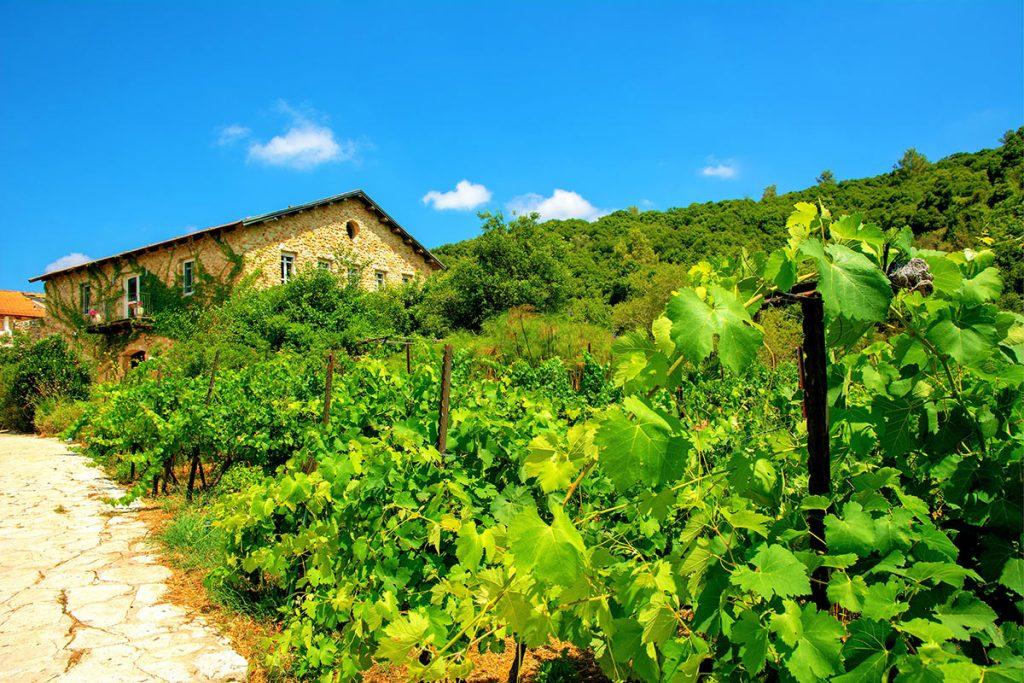 The-Best-Wineries-in-Israel