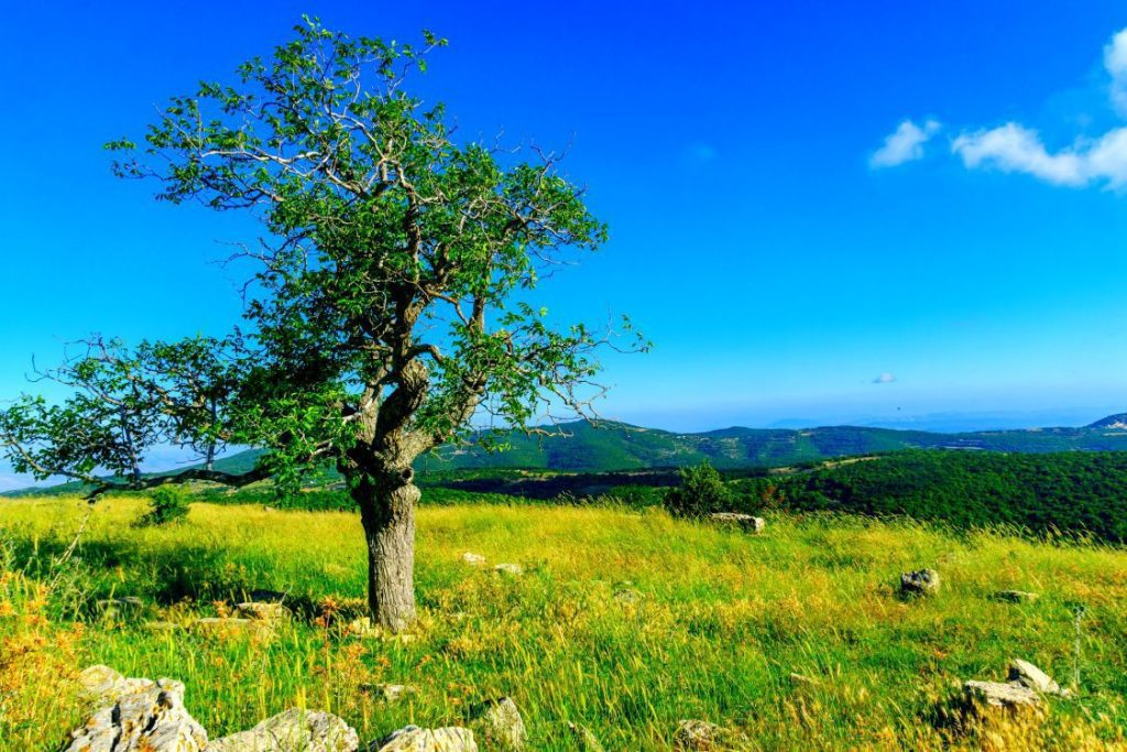 Mount-Meron-Nature-Reserve-top