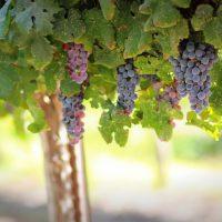 Best Wine Tour in Israel