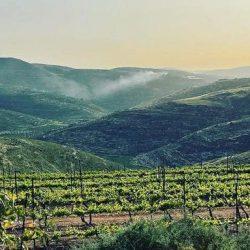 Samaria Day Tour - Hills of Samaria