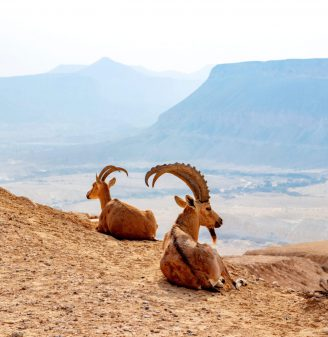 Negev World Desert Strip