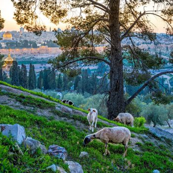 Christian Quarter Ultimate Guide - Mt Of Olives View