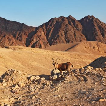 Eilat Ultimate Guide - Timna Park