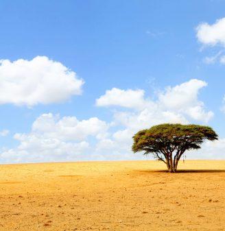 The Negev Desert Tour